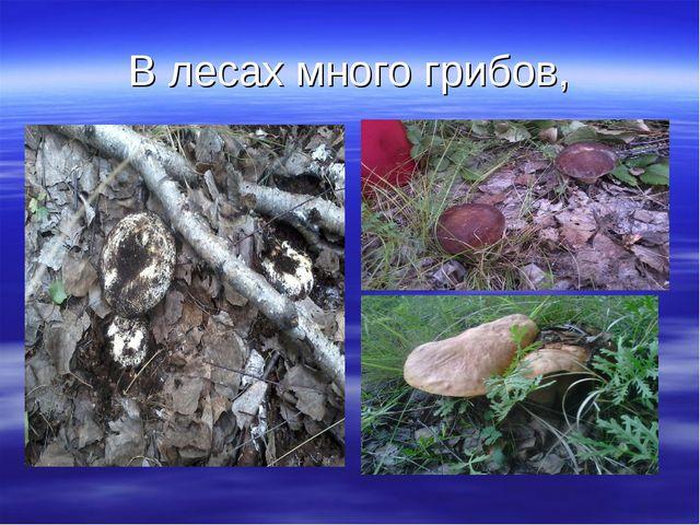 В лесах много грибов,