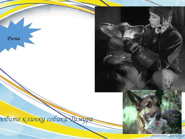 Назовите кличку собаки Тимура Рита