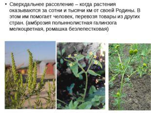 Сверхдальнее расселение – когда растения оказываются за сотни и тысячи км от