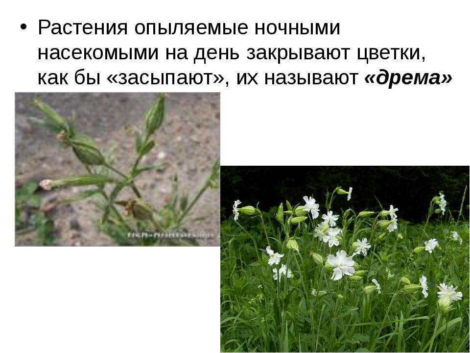 Растения опыляемые ночными насекомыми на день закрывают цветки, как бы «засып...