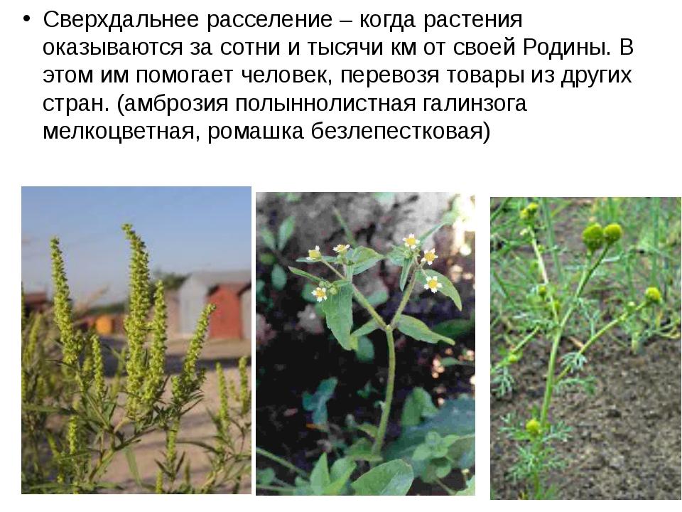 Сверхдальнее расселение – когда растения оказываются за сотни и тысячи км от...