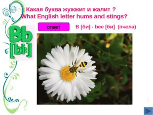 Какая буква жужжит и жалит ?  What English letter hums and stings? ответ B