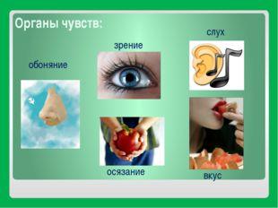 Органы чувств: вкус зрение слух обоняние осязание