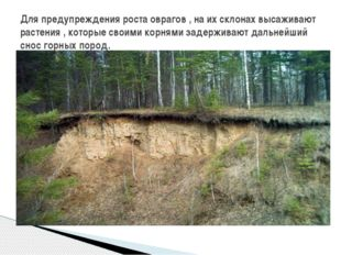Для предупреждения роста оврагов , на их склонах высаживают растения , котор