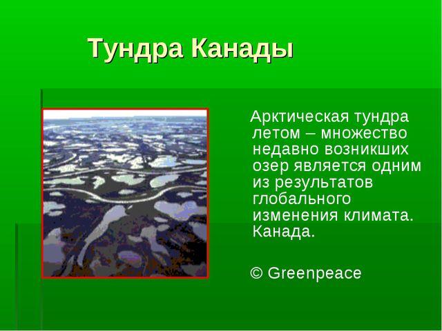 Тундра Канады Арктическая тундра летом – множество недавно возникших озер яв...