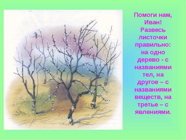 Помоги нам, Иван! Развесь листочки правильно: на одно дерево - с названиями т...