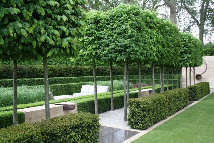 deko garten hecke buchsbaum baeume beschneiden form