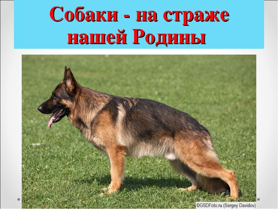 Собаки - на страже нашей Родины