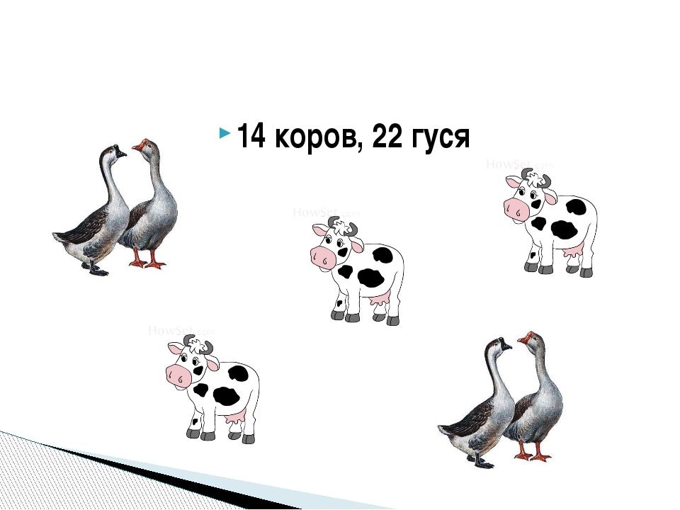 14 коров, 22 гуся