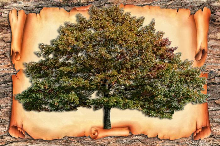 Family Tree - Генеалогическое древо (Многослойный шаблон в формате Photoshop)