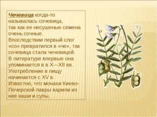 Чечевицакогда-то называлась сочевица, так как ее несушеные семена очень сочн