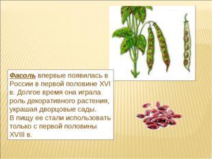 Фасольвпервые появилась в России в первой половине XVI в. Долгое время она и