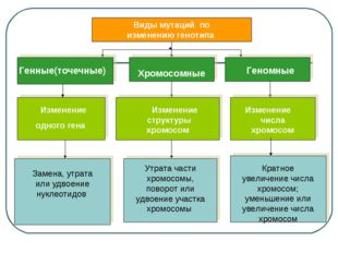 Виды мутаций по изменению генотипа