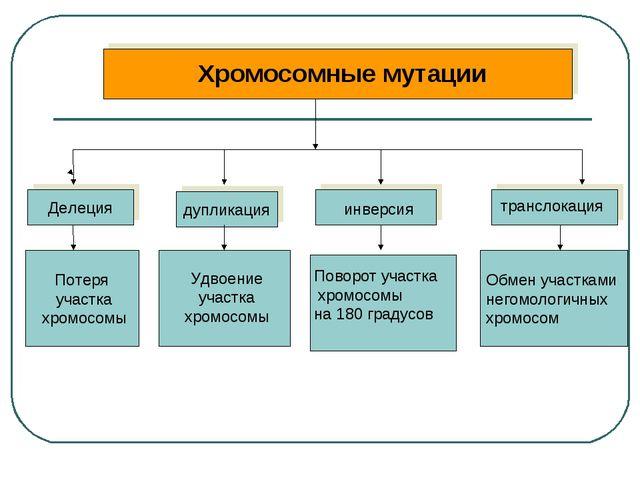 Хромосомные мутации Делеция дупликация Потеря участка хромосомы Обмен участк...