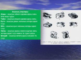 Асықтың атаулары: Алшы – асықтың тәйкеге қарама-қарсы жағы яғни алшы тұруы. Т