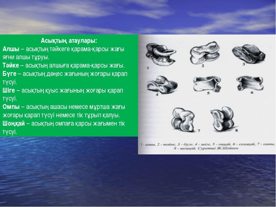 Асықтың атаулары: Алшы – асықтың тәйкеге қарама-қарсы жағы яғни алшы тұруы. Т...