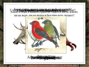 Какие птицы в нашей стране не садятся ни на землю, ни на воду, ни на ветки и