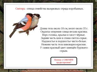 Снегирь - птица семейства вьюрковых отряда воробьиных. Длина тела около 18 см