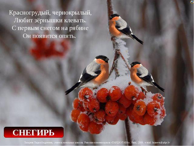 Красногрудый, чернокрылый, Любит зёрнышки клевать. С первым снегом на рябине...