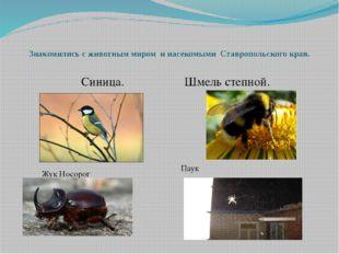 Знакомились с животным миром и насекомыми Ставропольского края. Синица. Шм