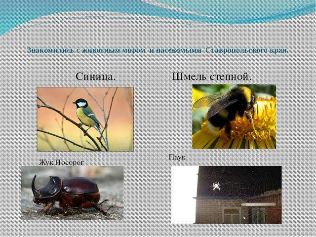 Знакомились с животным миром и насекомыми Ставропольского края. Синица. Шм...