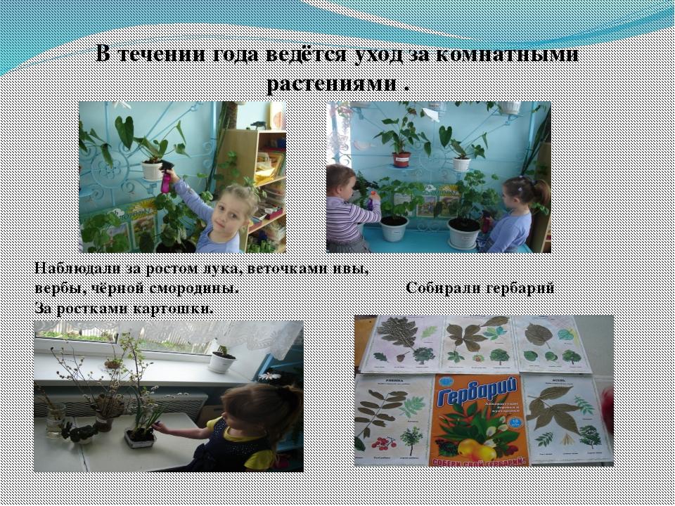 В течении года ведётся уход за комнатными растениями . Наблюдали за ростом лу...