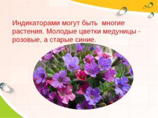 Индикаторами могут быть многие растения. Молодые цветки медуницы - розовые, а