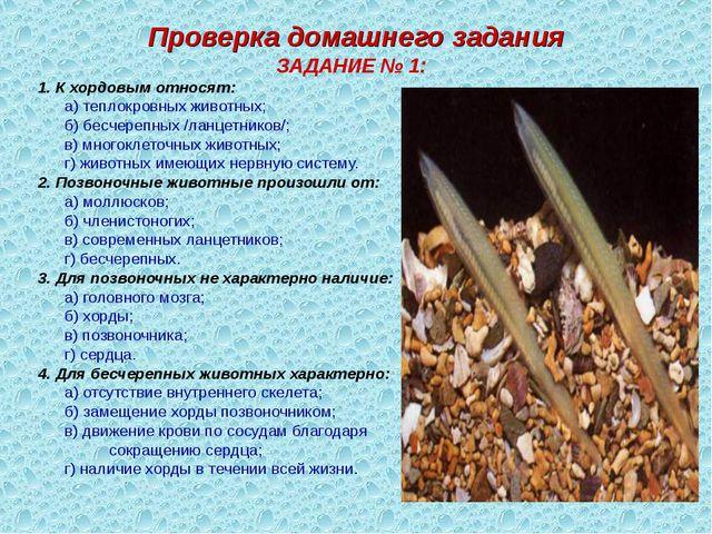 Проверка домашнего задания ЗАДАНИЕ № 1: 1. К хордовым относят: а) теплокровн...