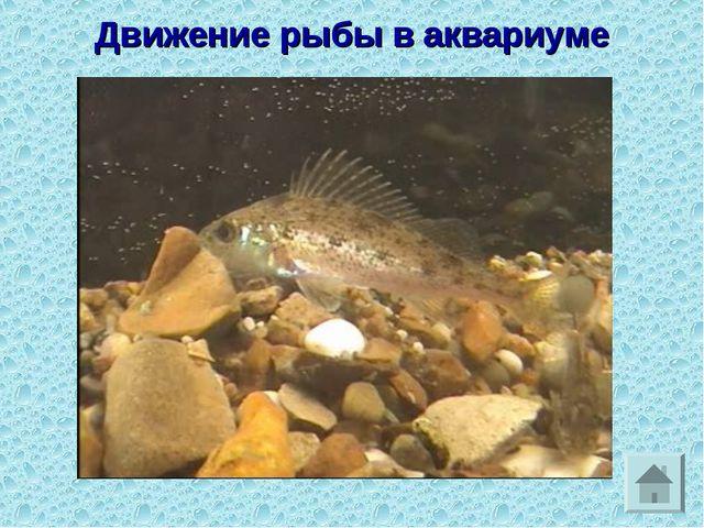 Движение рыбы в аквариуме