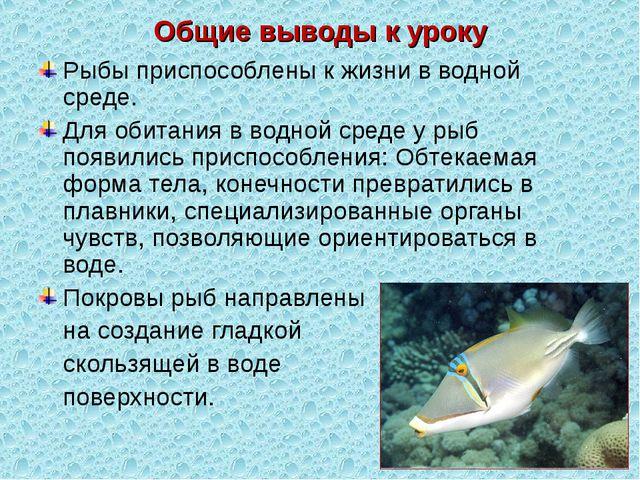 Общие выводы к уроку Рыбы приспособлены к жизни в водной среде. Для обитания...