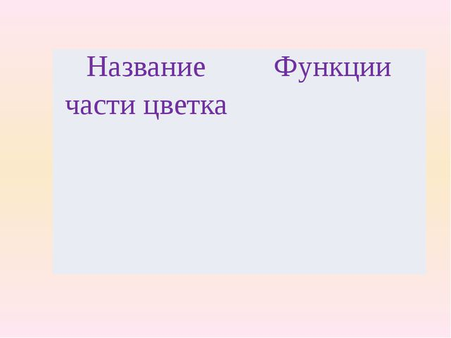 Название части цветка Функции