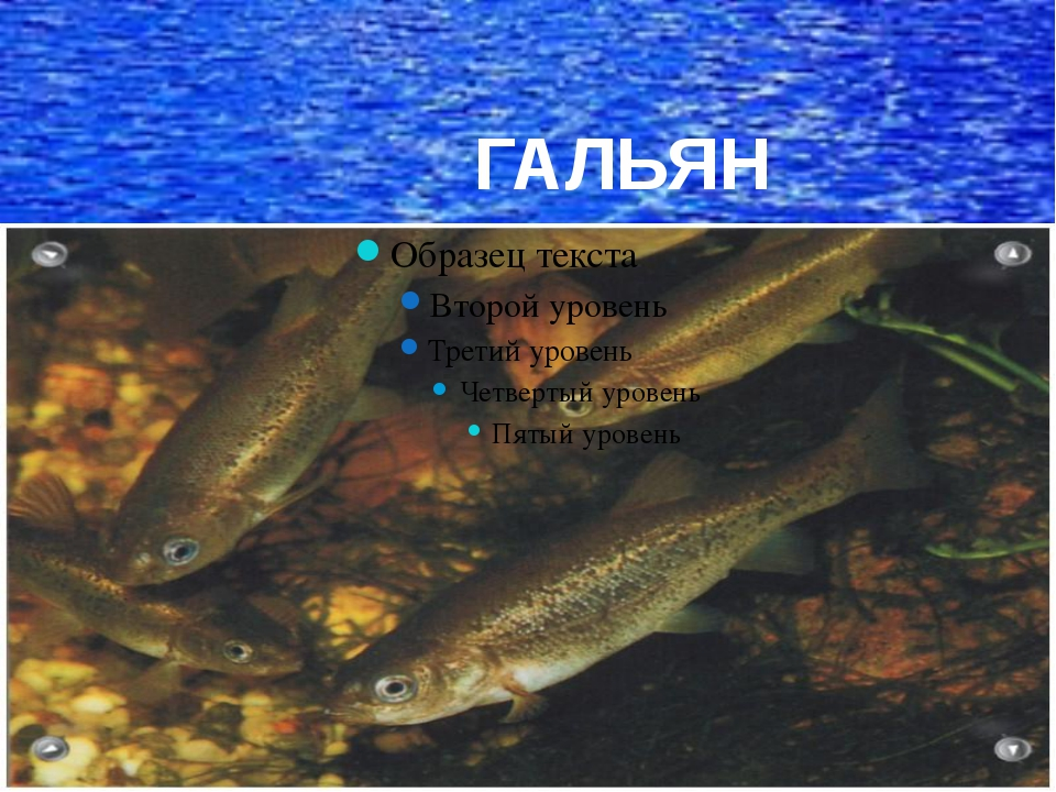 ГАЛЬЯН