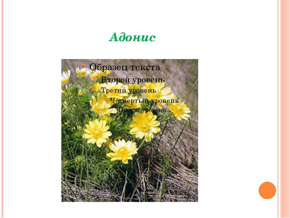 Почему эти растения зацветают первыми так рано весной? Раннее появление трав...