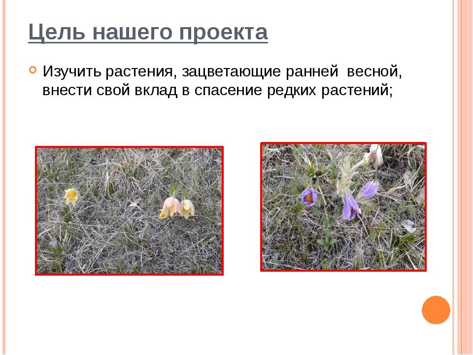 Цель нашего проекта Изучить растения, зацветающие ранней весной, внести свой...