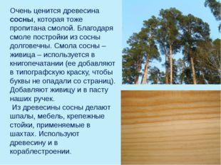 Очень ценится древесина сосны, которая тоже пропитана смолой. Благодаря смоле