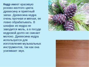 Кедр имеет красивую розово-желтого цвета древесину и приятный запах. Древесин