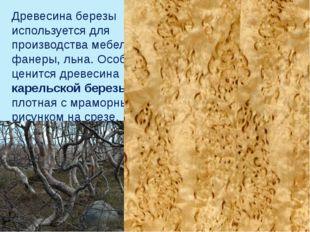 Древесина березы используется для производства мебели, фанеры, льна. Особенно