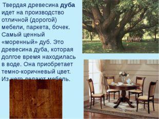 Твердая древесина дуба идет на производство отличной (дорогой) мебели, парке