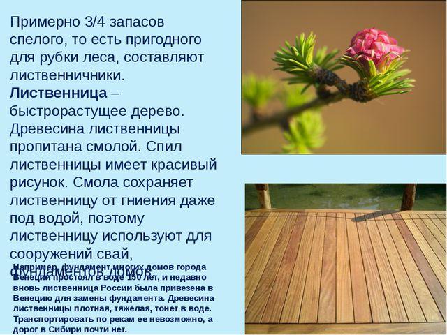 Примерно 3/4 запасов спелого, то есть пригодного для рубки леса, составляют л...
