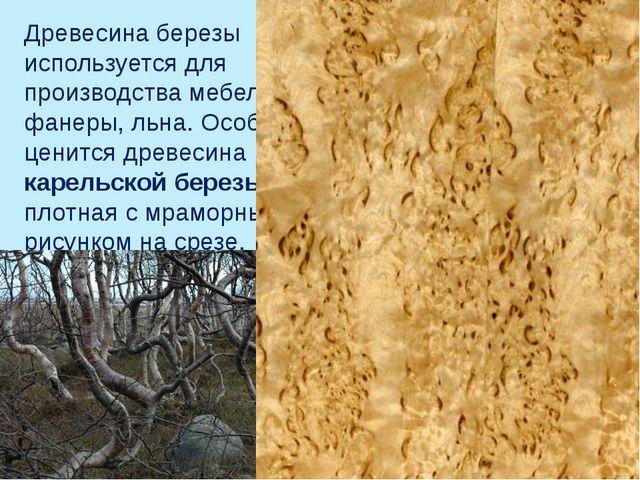 Древесина березы используется для производства мебели, фанеры, льна. Особенно...