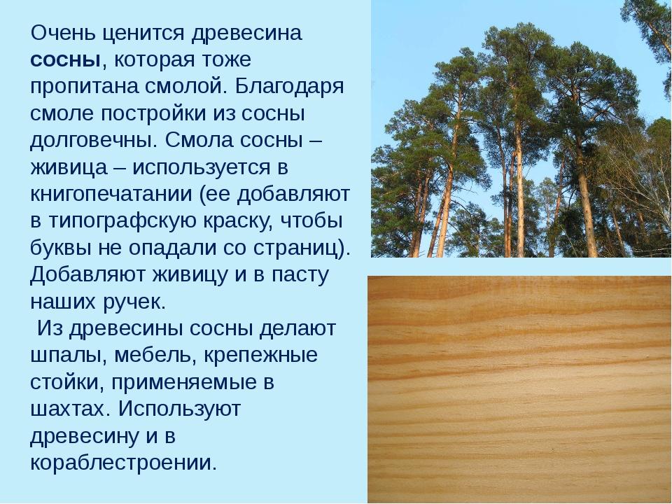 Очень ценится древесина сосны, которая тоже пропитана смолой. Благодаря смоле...