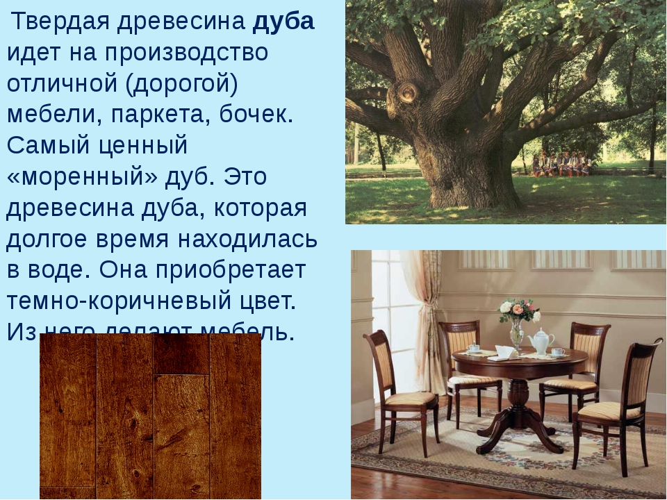 Твердая древесина дуба идет на производство отличной (дорогой) мебели, парке...