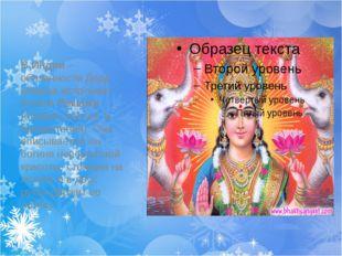 В Индии – обязанности Деда Мороза исполняет богиня Лакшми (богиня счастья и