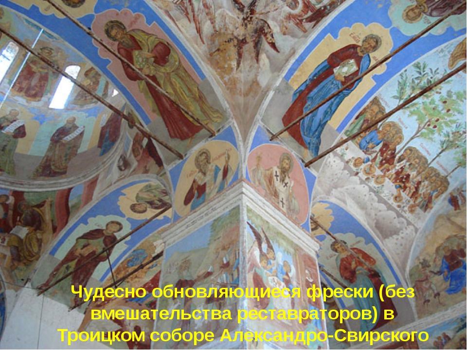 Чудесно обновляющиеся фрески (без вмешательства реставраторов) в Троицком соб...