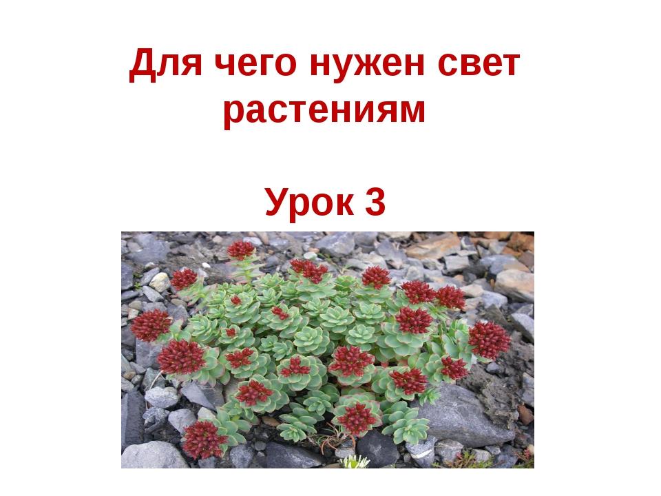 Для чего нужен свет растениям Урок 3
