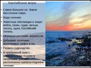 Каспийское море Самое большое на Земле бессточное озеро. Вода соленая. Животн