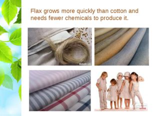 Flax grows more quickly than cotton and needs fewer chemicals to produce it.