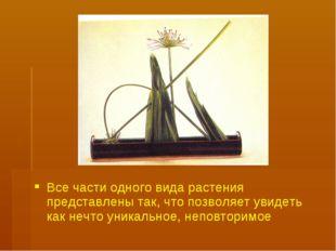 Все части одного вида растения представлены так, что позволяет увидеть как не