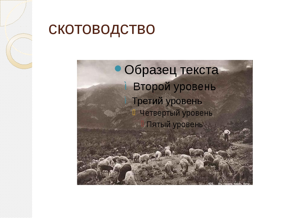 скотоводство