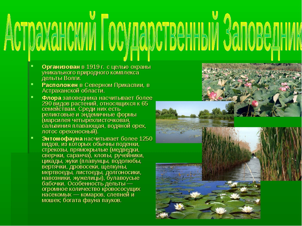 Организован в 1919 г. с целью охраны уникального природного комплекса дельты...